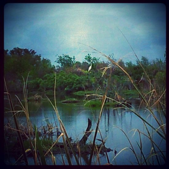 Relaxing Water Landscape Taking Photos Blue Birds Outdoors Golden Marsh Louisiana Jus Because