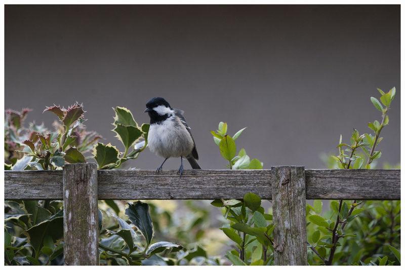 Birds perching on railing against plants