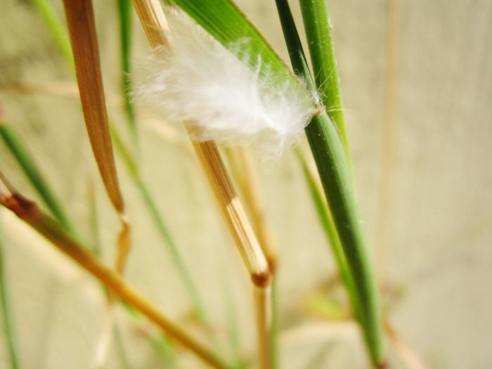 Feather Grass Stucked Macro Beauty Want To Be Free Feather  Need To Be Free Try To Fly Lack Of Wind Colour Of Life
