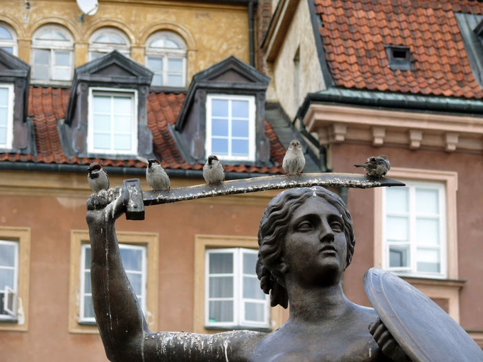 Birds perching on mermaid statue at warsaw old town square
