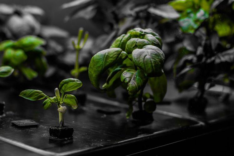🍃 Growth Plant