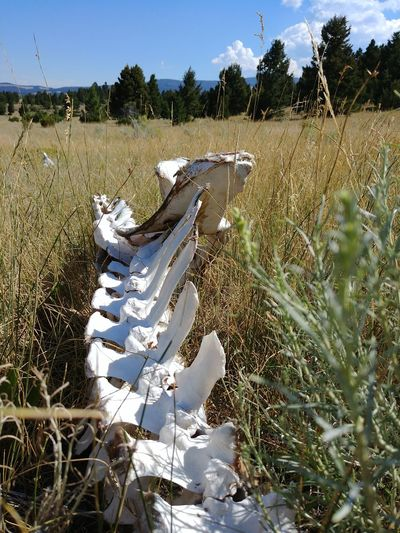 Day Nature Outdoors Growth Sky No People Tree Bones Sunbleached Prarie Montana