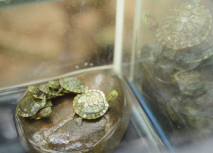 Reptile Indoors  Tortoise Shell Tortoise Water Animal Themes Close-up No People Day Turtles Lookingup