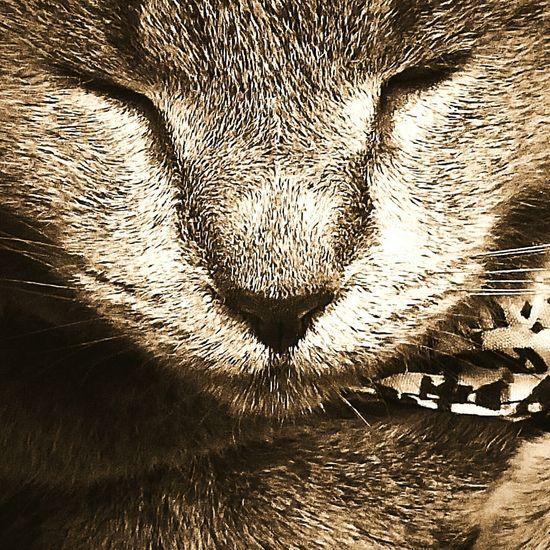 My Fur Baby Close-up Pet Portraits