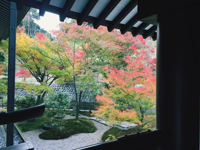 Autumn Tree Change Leaf Nature Day Window Growth No People Beauty In Nature Maple Leaf Outdoors Architecture 紅葉 紅葉シーズン