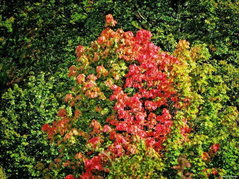 Herbstleuchten Herbst Herbststimmung Autumn Autumn Colors Autumn🍁🍁🍁 Rot Red Panasonicgx7 Lumix Gx7