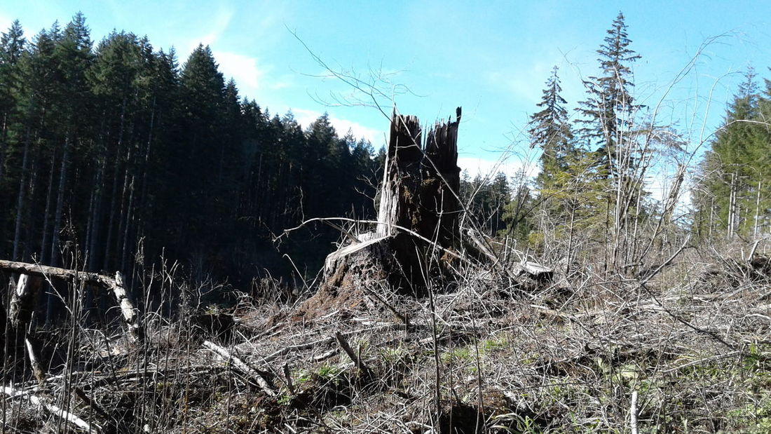 Clearcut remains Growth Nature Tree No People Day Outdoors Sky