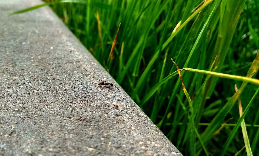 humanity Look View Micro Nature PhonePhotography Phone Photography Nature Insect Like A Human Like Human HUMANITY On The Edge On Edge On The Brink Abyss Deep Unknown Pit Chasm Leaf Close-up Grass Green Color Ant Insect Adventures In The City