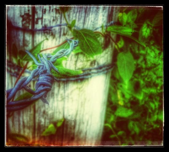 Barbed Wire Wednesday Barbwire Wednesday Barbwire Snapseed