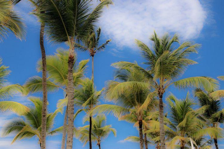 Photo taken in Punta Cana, Dominican Republic