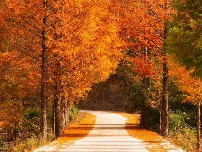 Autumn road Tree Autumn Plant Change Orange Color Nature Direction The Way Forward Road Autumn Collection Fall Treelined