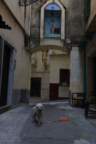 San Remo, Italy San Remo Animal Themes Architecture Building Exterior Built Structure Day Dog Domestic Animals Full Length Italy Mammal No People One Animal Outdoors Pets