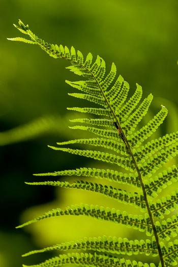 Branch Leaf