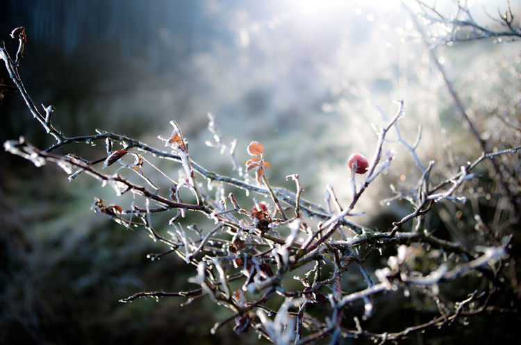 Beauty In Nature Branch Close-up Growth Nature No People Outdoors Tree Winter Winterwonderland EyeEmNewHere