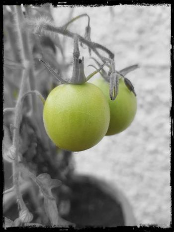 testing out a new photo editing app Tennis Tennis Ball Sport Tree Hanging Studio Shot Close-up Growing Orange Tree Auto Post Production Filter