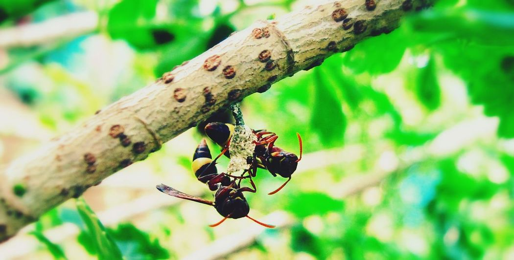 Caring for the child.! Insect Couples❤❤❤ No People Outdoors Branch Tree Close-up Leaf Day Nature Animals In The Wild Animal Themes Animal Wildlife Summer Time ☀