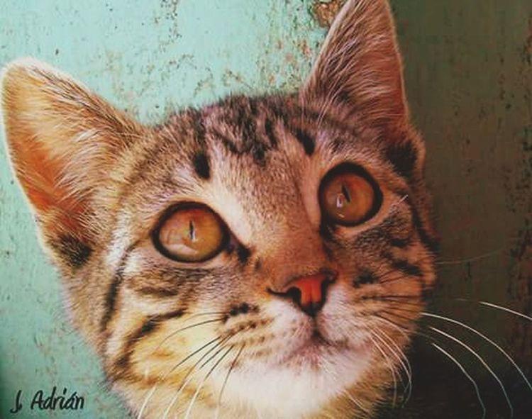Ojos. Gato Cat Eyes Universo Positivo Universo Paralelo Universo Gato