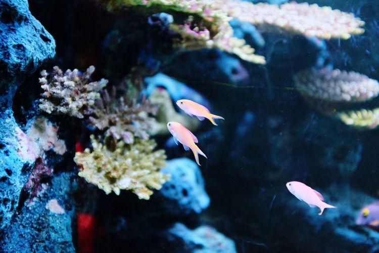 Fish Animals In The Wild Water Underwater Nature Sea Life Animal Themes Aquarium Beauty In Nature UnderSea