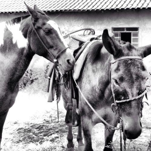 Fidelidade Horses Minasgerais EyeEm Nature Lover