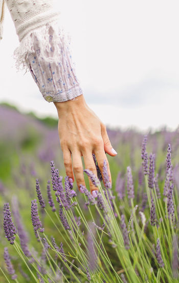 CROPPED VIEW OF WOMAN'S HAND AGAINST LAVENDER FLOWERS