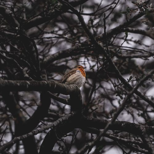 Bird Watching Bird Photography Park Bird Little Animal Animals In The Wild One Animal Animal Animal Wildlife Animal Themes Bird Tree Vertebrate Branch Perching No People Nature Outdoors Selective Focus Low Angle View Focus On Foreground