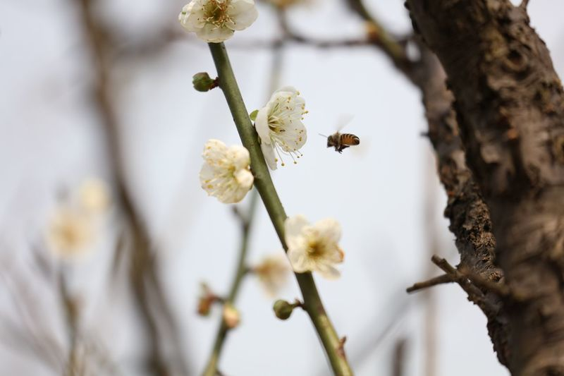 Close-Up Of White Flowers On Branch