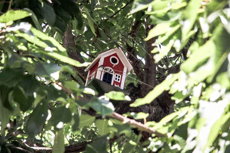 Bird House Danish Design Architecture Branch Close-up Day Green Color Growth Hanging Leaf Low Angle View Nature No People Outdoors Repaired Tree