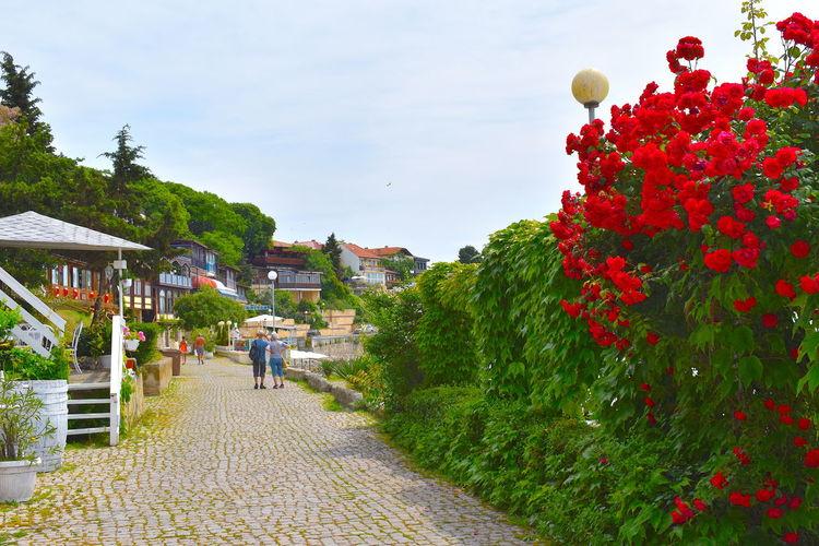 People walking on flowering plants against sky
