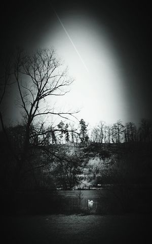 Outdoors No People Beauty In Nature Bare Tree Sky Nature City Tree Tranquility Swan River Maine River Noir