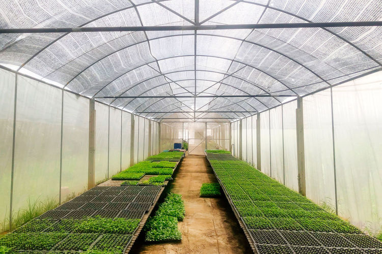 View of an empty corridor in greenhouse