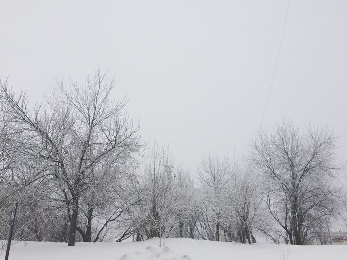 Snow Winter Cold Temperature Bare Tree Nature Weather Beauty In Nature White Color Tree No People Outdoors Tranquility Landscape Scenics Tranquil Scene Clear Sky Day Branch Snowing Sky