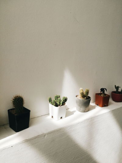 cactus on the wall. Potted Plant Plant Barrel Cactus Cactus Thorn Plant Life