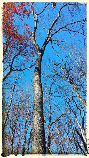 Clevelandmetroparks Fall EyeEm Nature Lover Cleveland Metroparks TreePorn Looking Up Hugging A Tree Tree_collection  Sky And Trees Treescape