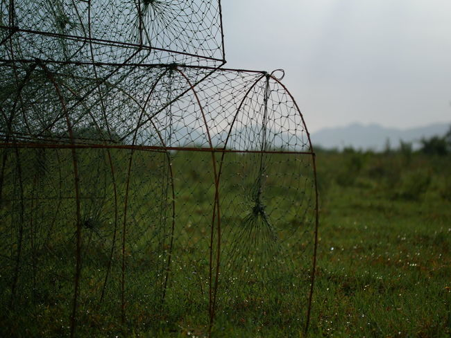 Rural Thailand Country Side Country Side Landscape Day Environment Fence Field Fish Trap Focus On Foreground Grass Green Color Growth Land Landscape Metal Nature No People Outdoors Plant Protection Rural Scene Sky Tranquility Tree
