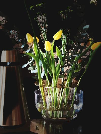 Pretty Flowers, Jaime Hayon and Bang&Olufsen Luxurylife IPhone X Fritz Hansen Interior Bang&olufsen Plant Flower Growth Flowering Plant Nature Beauty In Nature Close-up Freshness Flower Arrangement Plant Part Vase Green Color Indoors  No People Vulnerability  Flower Head Potted Plant Fragility Day Leaf