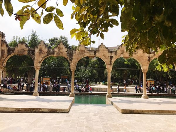 Balıklıgöl Urfa Urfacity Şanlıurfa Tree Arch Water Architecture Day Built Structure Outdoors Swimming Pool Reflecting Pool Architectural Column Building Exterior Nature Sky No People First Eyeem Photo EyeEm Best Shots EyeEm Nature Lover EyeEmNewHere EyeEm Gallery EyeEm EyeEmBestPics