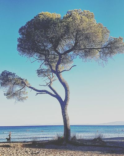 Summertime Tree Beach Sun Sea Summerphotography First Eyeem Photo EyeEmNewHere