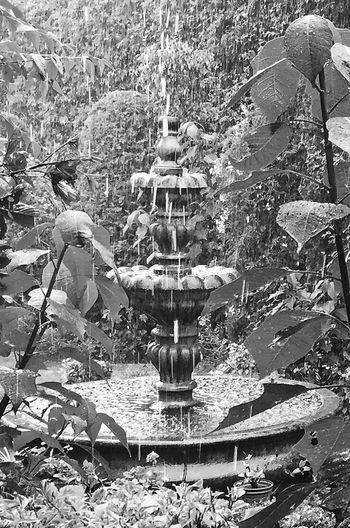 Raindrops Rain In My Garden Fountain Melancholic Landscapes Rainy Days Secret Garden Blackandwhite EyeEm Best Shots - Black + White UnspokenGrief My Best Photo 2015 Black And White Friday
