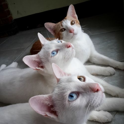 Close up of cats looking up