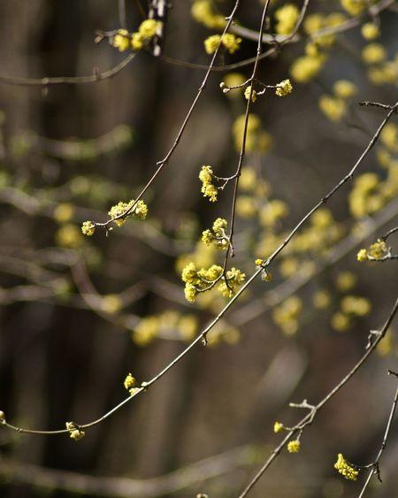 Yellow Flowers Gelbe Blumen🌾 äste Twig Zweige Branch Natur Nature