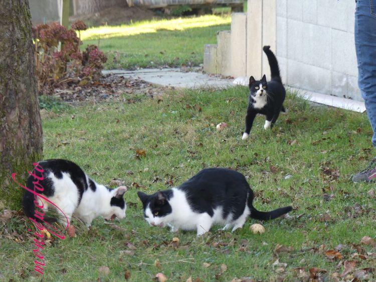 Fütterung der Raubtiere. 💕💗 Monique52 Mieze Miezekatze Pussie Katzen Katzen 💜