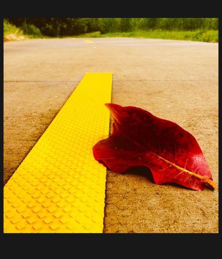 Leaf 🍂 Leaf Path Fallen Leaf