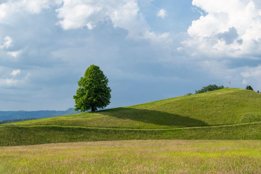 Tranquil landscape in Switzerland with a large lonely tree in the bright sunlight in the foreground and white clouds and blue clouds in the background. Peaceful View Beautiful Nature Peaceful Blue Sky White Clouds Shadow Canton Zug Switzerland Mindful Mindfulness Serene Landscape Serene Plant Cloud - Sky Sky Beauty In Nature Growth Land Tranquility Field Tranquil Scene Green Color Scenics - Nature Landscape Tree Environment Day Nature Grass Rural Scene Idyllic