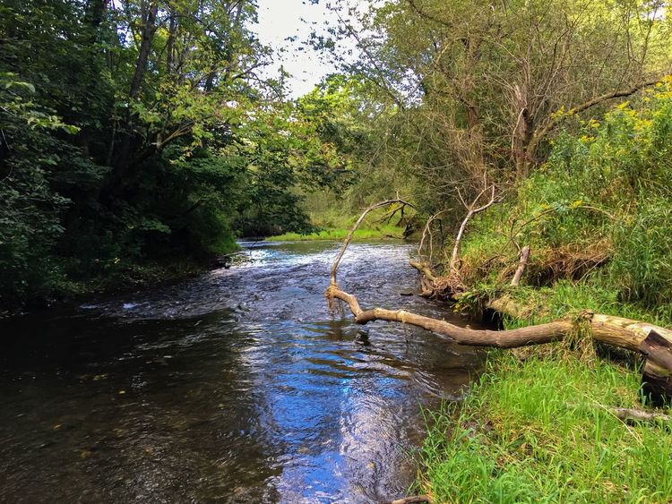 Tree Forest Tranquility Tranquil Scene Stream Water Nature Scenics Flowing Water Non-urban Scene Fallen Tree Log Tree Trunk River Beauty In Nature Day Flowing WoodLand Green Color Vacations Minnesota Nature_collection Hiking