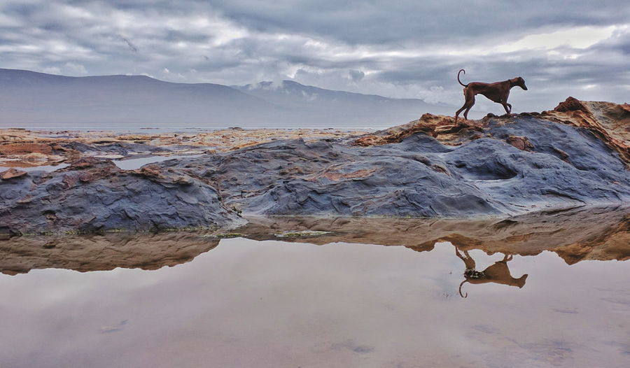 Side view of a dog on rocky shore