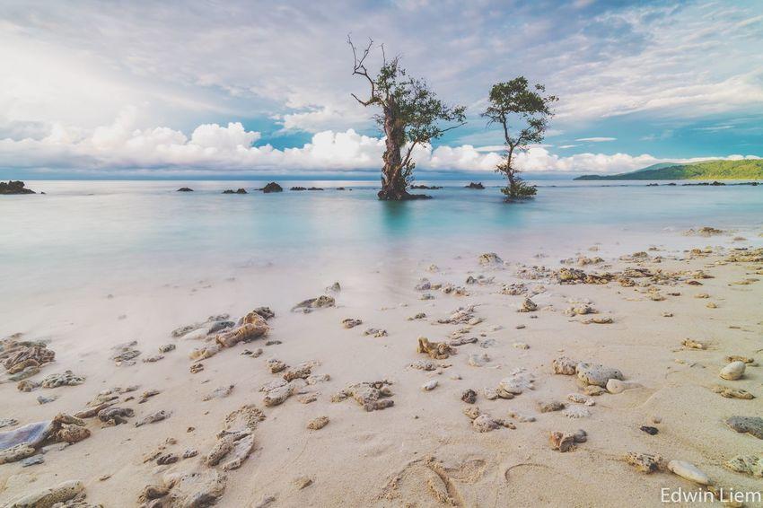 Brotherhood of Tree Nature Morning Sky Landscape Seascape Slowspeedphotography Scenics