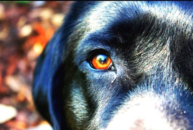 Animals Dog Beautifuleyes