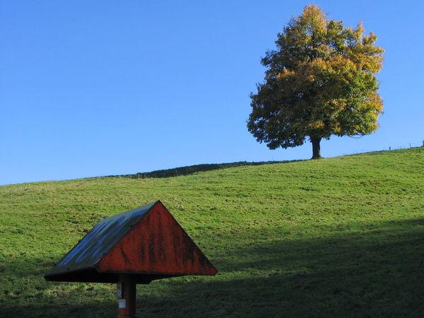 autumn sky Autumn🍁🍁🍁 Blue Clear Sky Field Landscape Nature Sky Tranquil Scene