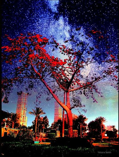 Imagination Edited Photos Edited Dramatic Sky SkySkyscraper Sky And Trees Night City Nature Night Sky Night Out Creative Edit Night Shot Nightview Blue Tree Outdoors Creativity Low Angle View Cairo City Cairo Egypt Taking Photos