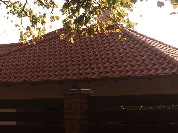 Roof Tree Building Exterior Built Structure Low Angle View Architecture Roof Tile House Growth Outdoors Day Tiled Roof  Plant No People Branch Nature Sky